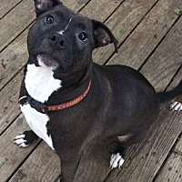 Adopt A Pet :: Rocco - Wichita, KS