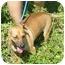 Photo 2 - Dachshund/Chihuahua Mix Dog for adoption in Bellflower, California - Charlie