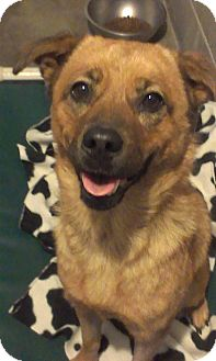 German Shepherd Dog Mix Dog for adoption in Lake Odessa, Michigan - Jinny
