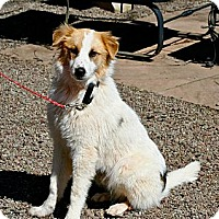 Adopt A Pet :: Willie - Hastings, NY
