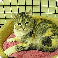 Adopt A Pet :: Issabelle - Mission, BC
