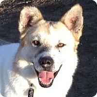 Adopt A Pet :: Davey - Sacramento, CA