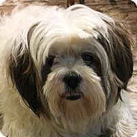 Adopt A Pet :: LuLu - Hales Corners, WI