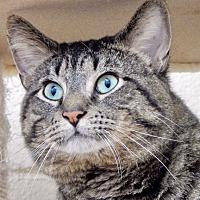 Adopt A Pet :: Xavier - Long Beach, NY