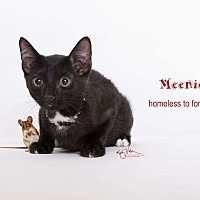 Adopt A Pet :: Meenie - Sherman Oaks, CA