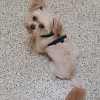Adopt A Pet :: Caleb - Thousand Oaks, CA