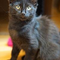 Adopt A Pet :: Filbert - Alameda, CA