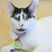 Adopt A Pet :: Raja - Glendale, AZ