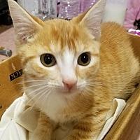 Adopt A Pet :: Waffles - Trevose, PA