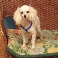 Adopt A Pet :: Alvin - Tulsa, OK