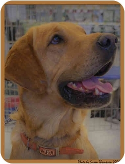 Hound (Unknown Type) Mix Dog for adoption in McCormick, South Carolina - Ben