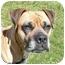Photo 1 - Boxer Dog for adoption in San Clemente, California - HANNAH