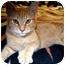 Photo 1 - Domestic Shorthair Cat for adoption in Tillamook, Oregon - KK