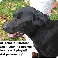 Adopt A Pet :: # 560-09 - RESCUED! - Zanesville, OH