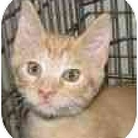 Adopt A Pet :: Carson - Jacksonville, FL