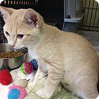 Adopt A Pet :: Cindy Lou Who - Byron Center, MI
