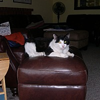 Adopt A Pet :: Herbie - Hurricane, UT