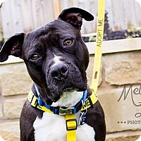 Adopt A Pet :: Jerry - Austin, TX