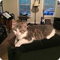 Adopt A Pet :: Prince - Port Republic, MD