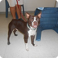Adopt A Pet :: Toby - Lockhart, TX