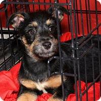 Adopt A Pet :: Johnny - Phoenix, AZ