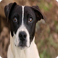 Adopt A Pet :: Stanley - East Hartford, CT