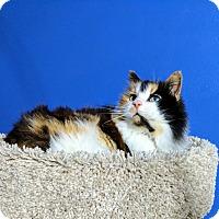 Adopt A Pet :: Valentina - Fairborn, OH