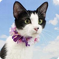 Adopt A Pet :: Heidi - Harrisonburg, VA
