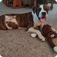 Adopt A Pet :: Nic - Manhattan, KS