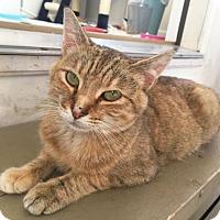 Adopt A Pet :: Freya - Harrisonburg, VA