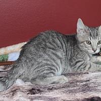 Adopt A Pet :: Viggo (& Dobby) - Herndon, VA