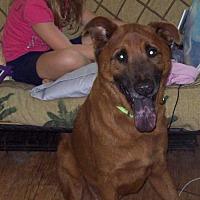 Adopt A Pet :: Red - newfoundland, PA