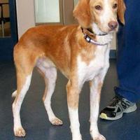Adopt A Pet :: August - Richmond, VA