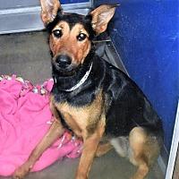 Adopt A Pet :: Izzy - San Jacinto, CA