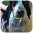 Photo 1 - Hound (Unknown Type) Mix Dog for adoption in Allentown, Pennsylvania - Shadow