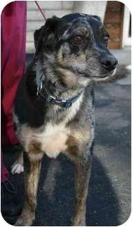 Catahoula Leopard Dog/Australian Shepherd Mix Dog for adoption in Los Angeles, California - Tucker