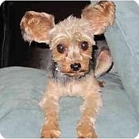 Adopt A Pet :: Oliver - West Palm Beach, FL