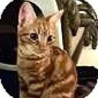 Adopt A Pet :: Tigger - Escondido, CA
