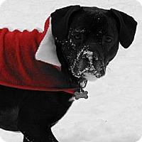 Adopt A Pet :: Leo - Wasilla, AK