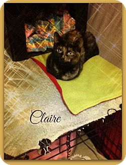 Domestic Shorthair Cat for adoption in New Richmond,, Wisconsin - Claire
