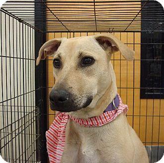 Shepherd (Unknown Type)/Labrador Retriever Mix Puppy for adoption in Las Vegas, Nevada - Sandy