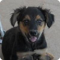 Adopt A Pet :: Delores - dewey, AZ