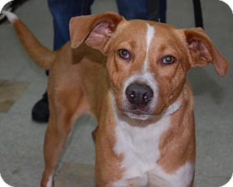 Hound (Unknown Type) Mix Dog for adoption in Brooklyn, New York - River