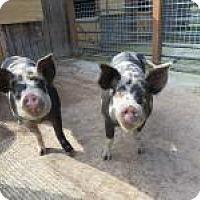Adopt A Pet :: Louise & Ethel - Quilcene, WA