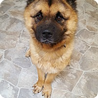 Adopt A Pet :: Bailey - Fennville, MI