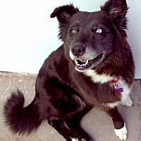 Adopt A Pet :: Liana - Canyon Country, CA