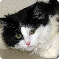 Adopt A Pet :: Snowy - Ruidoso, NM