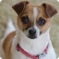 Adopt A Pet :: Alice - Lakeport, CA