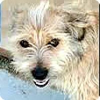 Adopt A Pet :: Axel-ADOPTION PENDING - Boulder, CO