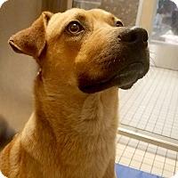 Adopt A Pet :: Rebecca - Marina del Rey, CA